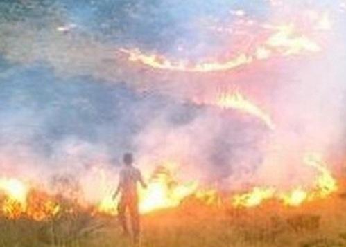 مار میشو در آتش بی احتیاطی سوخت!