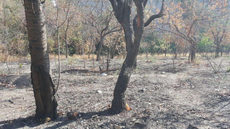 گزارش تصویری / سوزاندن و قطع درختان ارومیه توسط افراد ناشناس