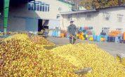 باغداران آذربایجان غربی در فروش محصولات خود با مشکلات عدیده ای مواجه اند