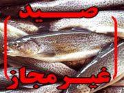 صید غیر مجاز در سد ارس معیشت مردم را تهدید می کند