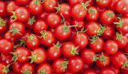 خرید گوجه فرنگی از کشاورزان به قیمت ۷۰۰ تومان منصفانه نیست / حداقل قیمت خرید باید ۱۵۰۰ تومان باشد